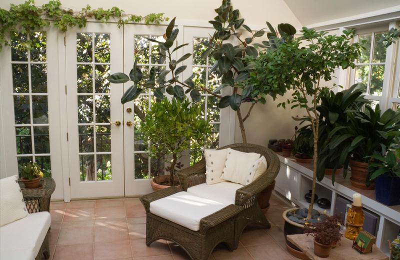 Wintergarten mit vielen Pflanzen und gemütlichem Sofa